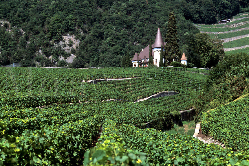 Switzerland Wine Vineyard Petit Vignoble in Yvorne on Lake Geneva Switzerland