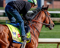 LOUISVILLE, KENTUCKY - MAY 01: Battle of Midway, owned by Fox Hill Farms, Inc. and trained by Jerry Hollendorfer, exercises in preparation for the Kentucky Derby at Churchill Downs on May 1, 2017 in Louisville, Kentucky. (Photo by Jesse Caris/Eclipse Sportswire/Getty Images)