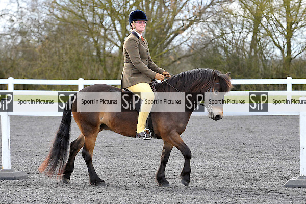 Ring 2. BSPS showing show. Norton Heath Equestrian Centre. Essex. 02/03/2014. MANDATORY Credit Ellie Ingram/Sportinpictures - NO UNAUTHORISED USE - 07837 394578
