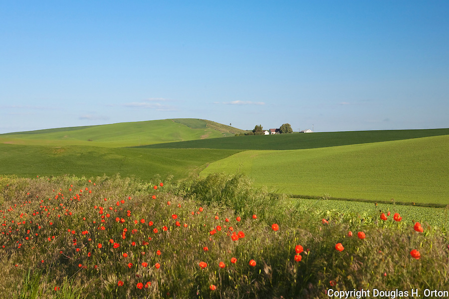 Isolated farmhouses dot the back roads of the Palouse Hills, Washington State's famous wheat ranching region.