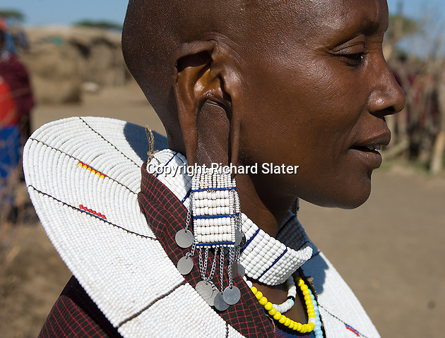 The traditional shaved head and split ears of a Masai woman and the traditional ornate bead earrings, collar and necklaces. A village near the Serengeti National Park, Tanzania.