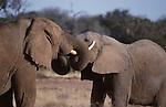 african elephants at Samburu National Park