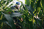 David Brandt heads in to his corn field to dig up a soil sample on his 1,200-acre farm in central Ohio. Brandt grows corn, soy, wheat and hay on his farm that he runs with his wife, Kendra, in Carroll, Ohio. He has been practicing no-till farming since 1971, and has planted cover crops, such as winter peas, cabbage, clover and millet, which return nutrients to the soil, since 1978. His return to these traditional farming practices have allowed Brandt to drastically reduce his usage of fertilizers and pesticides, has increased the soil fertility and strengthened the land's tolerance to drought and excessive rain.