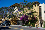 Jacaranda and bouganvillea spring blossms in Los Angeles, CA