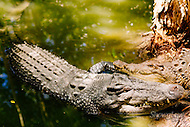 Image Ref: A146<br />