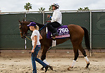 DEL MAR, CA - NOVEMBER 02: Princess Warrior, owned by Evan Trommer, Matthew Trommer & Andrew Trommer and trained by Kenneth G. McPeek, walks to the track before exercising in preparation for the 14 Hands Winery Breeders' Cup Juvenile Fillies at Del Mar Thoroughbred Club on November 2, 2017 in Del Mar, California. (Photo by Casey Phillips/Eclipse Sportswire/Breeders Cup)