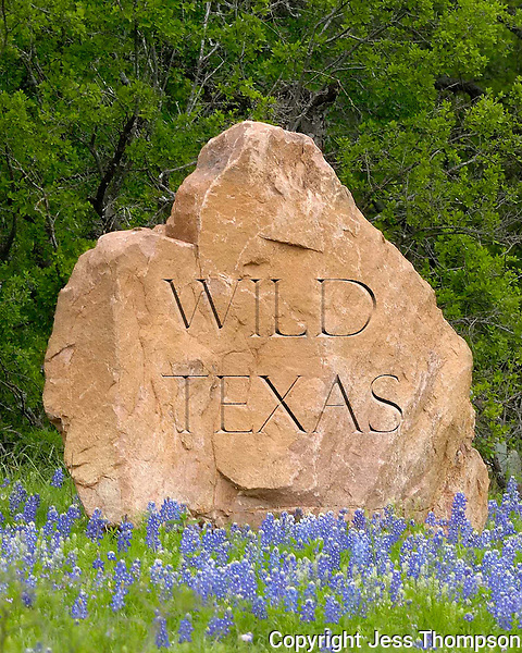 Bluebonnets with words superimposed on rock