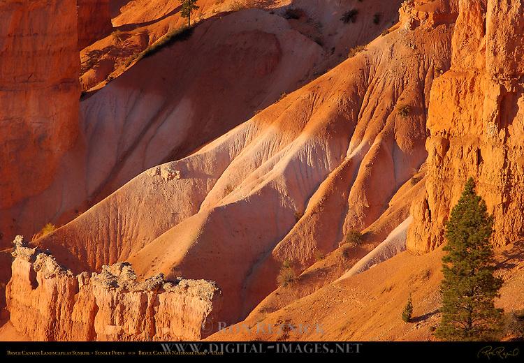 Bryce Canyon Landscape at Sunrise, Sunset Point, Bryce Canyon National Park, Utah