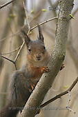 Carl, ANIMALS, wildlife, photos(SWLA2132,#A#)