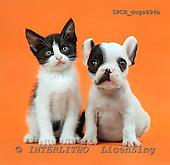 Xavier, ANIMALS, dogs, photos+++++,SPCHDOGS894B,#a# Hunde, perros