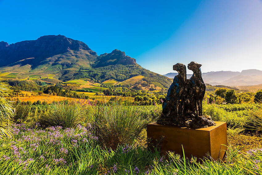 Ten bronze sculptures of cheetahs by Dylan Lewis are displayed in situ (with theVineyards in background), Delaire Graff Wine Estate atop Helshoogte Pass, near Stellenbosch, Cape Winelands (near Cape Town), South Africa.