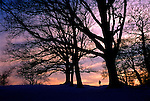 Trees and Sunset, Hampstead Heath, London England