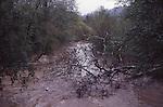 San Lorenzo River in Felton at flood stage