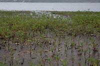 SAO PAULO, SP - 23.12.2014 - SOBE NÍVEL DA GUARAPIRANGA - Vegetação cresce rapidamente nas margens da represa do Guarapiranga na zona sul de São Paulo. Com as chuvas na região a represa volta a apresentar alta e nível sobe para 36,6% de sua capacidade na manhã desta terça-feira(23).<br /> <br /> (Foto: Fabricio Bomjardim / Brazil Photo Press)