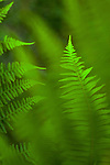 Ferns In Forest Setting