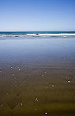 Ninety Mile Beach, Far North, Northland, New Zealand.