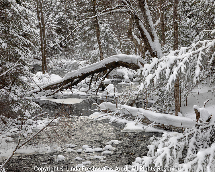 Winter creek in northern Wisconsin.