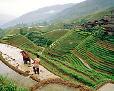 CHINA, Longsheng, elevated view of farmers working the Dragon Backbone Rice Terraces