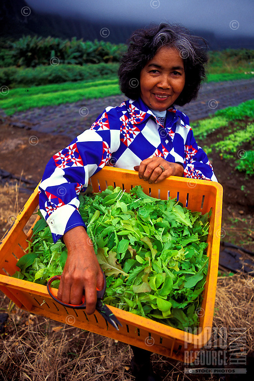Woman holding just harvested baby lettuce grown at Nalo Farms, Waimanalo