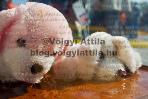 Animal rights activist protest in a public square with toy animals put in a canister of toxic sludge collected from the Devecser disaster site in Hungary's Veszprem county which has been flooded by toxic sludge released by a dam accident in a nearby container. The toxic chemicals left its red marking on all the walls of the houses in and out and covered all moveable belongings and streets killing people and animals. Red sludge is a waste from bauxite fefining that has a strong caustic effect. The toxic flood covered an area of over 800-1,000 hectares (1,920-2,400 acres). Six people were killed and more than 150 injured in the disaster. Pollution from the red sludge now spread into the local rivers killing all life in rivers Marcal and Torna and now it mixed into the main European waterway river Danube. Officials say there is no risk of a biological or enviromental catastrophe there.  Devecscer, Hungary, Saturday, 09. October 2010. ATTILA VOLGYI