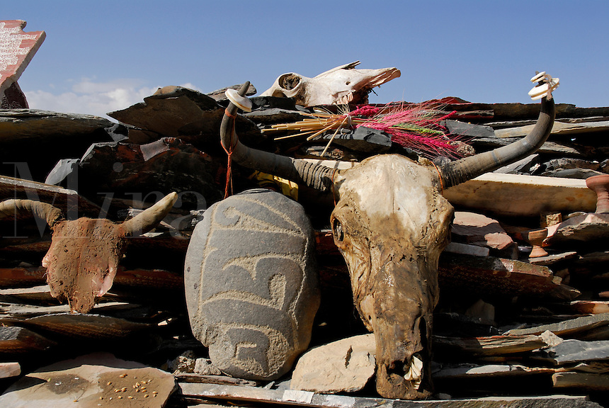Shrine with yak skulls, colored barley and mani, or prayer stones carved with Buddhist mantra Om Mani Padme Hum, on the pilgrim circuit, or kora, around the monastery walls of Sera Monastery, Lhasa, Tibet, China.