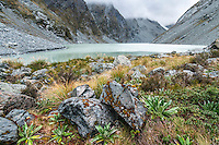 Ice Lake with garden of alpine plants on its shores, Westland National Park, West Coast, New Zealand