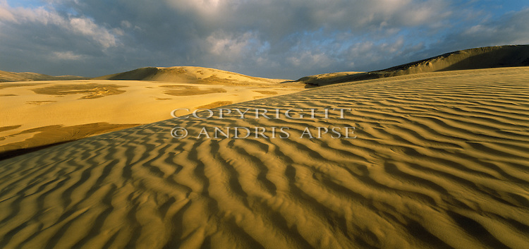 Sand dunes at Ninety Mile Beach. Northland Region. New Zealand