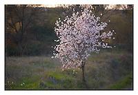 Spring Spring scenes
