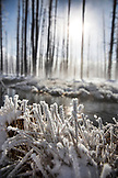USA, Wyoming, Yellowstone National Park, a detail of snow crystals by Tangle Creek, Bobby Sock Trees in the distance, Lower Geyser Basin