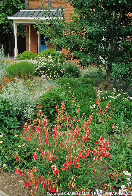 In the southwest and Rocky Mountain areas, water wise landscape designs come in all colors and shapes and incorporate a wide range of both nativespecies as well as appropriate adapted plants, ranging from succulents and cacti to endemic penstemons and traditional perennials.  A small cottage garen in Santa Fe is a fountain of color with red penstemons and other drought tolerant species.