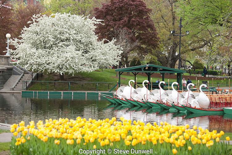 Public Garden spring afternoon flowers, Boston, MA tulips