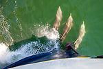 Common dolphins bow riding in Bahia de Magdalena, Baja Mexico