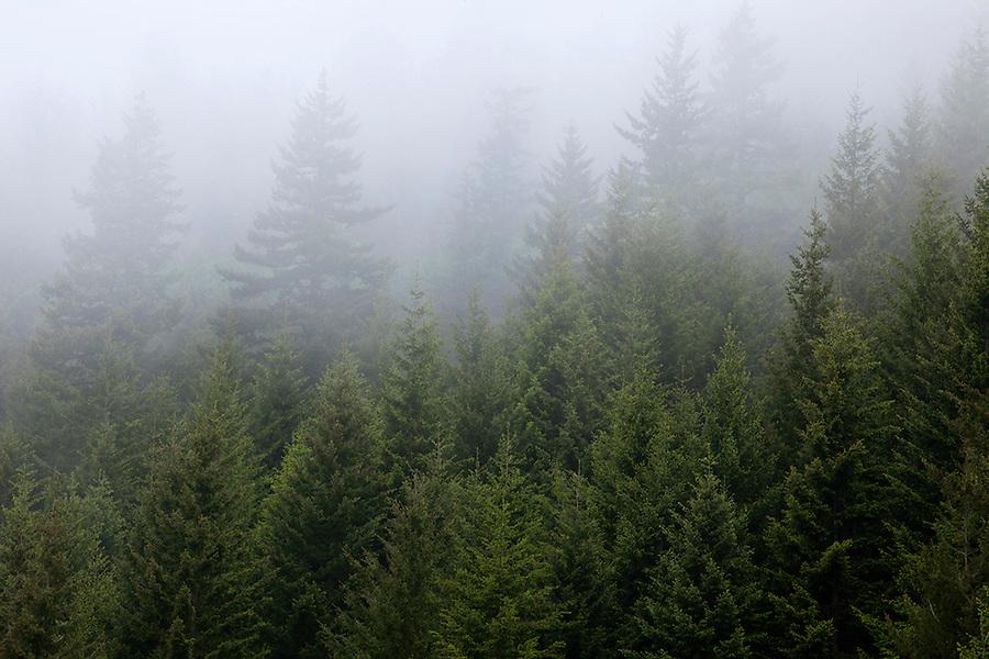 Morning fog in Columbia River Gorge, Oregon, OR, USA