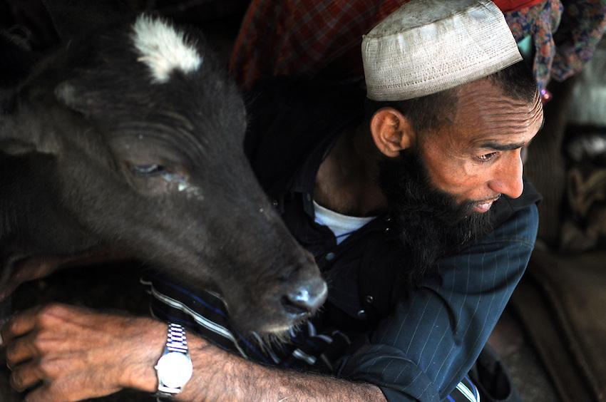 Dhumman brings a calf into the tent during a hailstorm