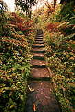 PANAMA, David, Guadalupe, Los Quetzales Lodge, a path leading to a Swiss style chalet in the cloud forest, Volcan Baru National Park and Cloud Forest of Friendship International Park, Central America