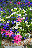 Annual container planter pot of Verbena, Lobelia erinus, Calibrachoa petunias, with rustic feel on lawn