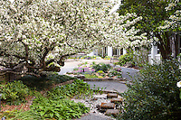 White flowering Cherry tree in demonstartion gardens at Norfolk Botanical Garden
