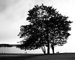 A clump of large trees against a sky and ocean, with small people in silhouette.