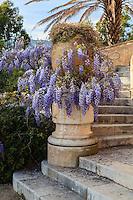 Le Domaine du Rayol:<br /> escalier menant &agrave; la terrasse de l'H&ocirc;tel de la Mer et glycine en fleurs.