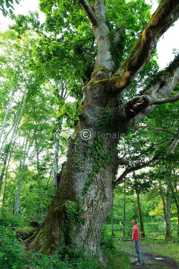 France, Cher (18), Oizon, château de la Verrerie, chêne remarquable en bordure de l'étang // Remarkable oak, France, Cher, park of château de la Verrerie.