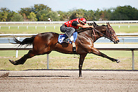 #56.Fasig-Tipton Florida Sale,Under Tack Show. Palm Meadows Florida 03-23-2012 Arron Haggart/Eclipse Sportswire.