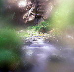 Soft focus view of river flowing through temperate rainforest, near Lorne, Victoria, Australia