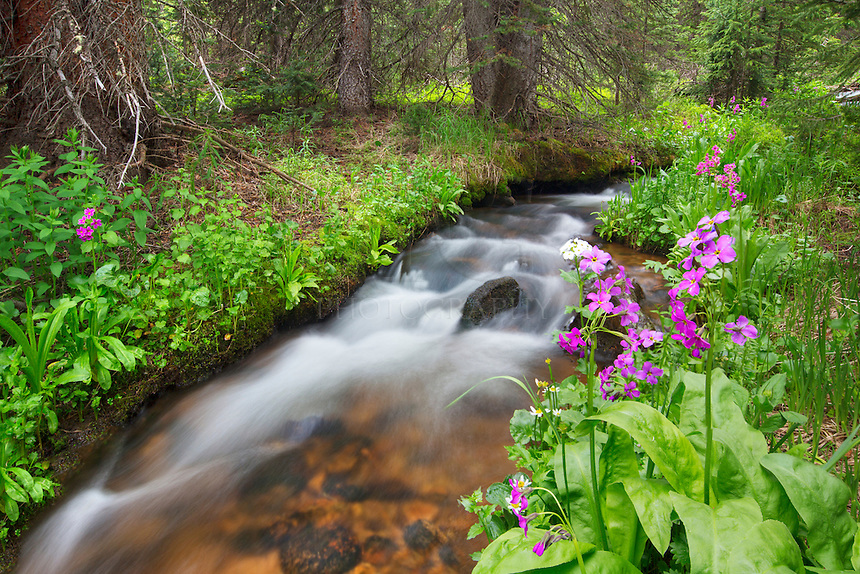 Melting snow gives Second Creek near Winter Park, Colorado, a pathway of water for plants and wildflowers that depend on the moisture each spring and summer.