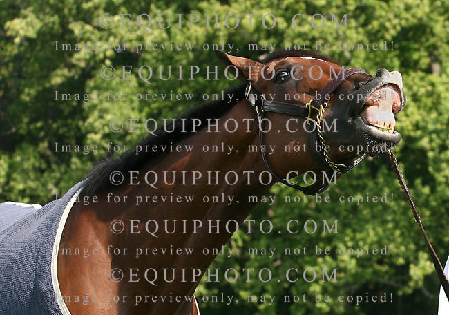 Kentucky Derby Champion Barbaro smiles for the cameras outside his barn at Fair Hill Training Center in Elkton, Maryland on Wednesday morning May 17, 2006. Photo by Bill Denver/EQUI-PHOTO