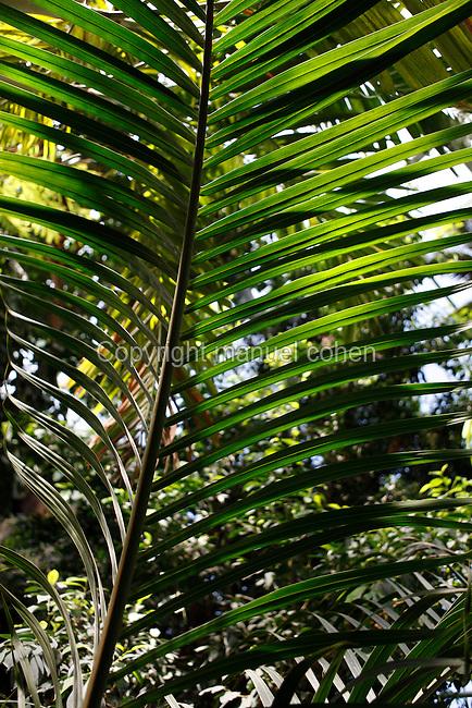 Tropical Rainforest Glasshouse (formerly Le Jardin d'Hiver or Winter Gardens), 1936, René Berger, Jardin des Plantes, Museum National d'Histoire Naturelle, Paris, France. Detail of Tropical plant.