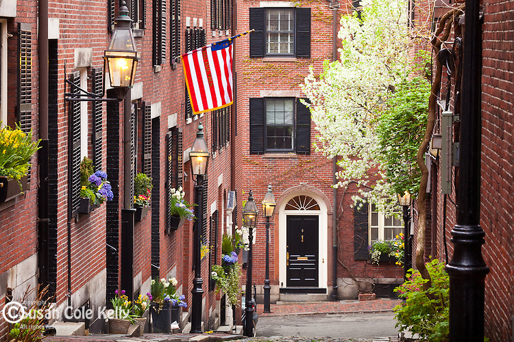 Window boxes and ornamental pear trees in bloom on Beacon Hill, Boston, MA, USA