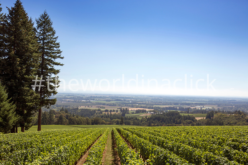 USA, Oregon, Willamette Valley, view of the Willamette Valley through the vines at Domaine Drouhin, Dundee