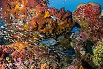 Beautiful Reef 4