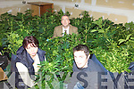 CANNABIS: Listowel Gardai? inspecting the cannabis plants worth EUR220,000 which were seized in Causeway last week, l-r: Garda Orla Coakley, Det Sgt John Heaslip, Garda Aidan Carey.