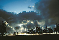 Dramatic horizon with tree line and clouds backlit by sunset, Kaui HI